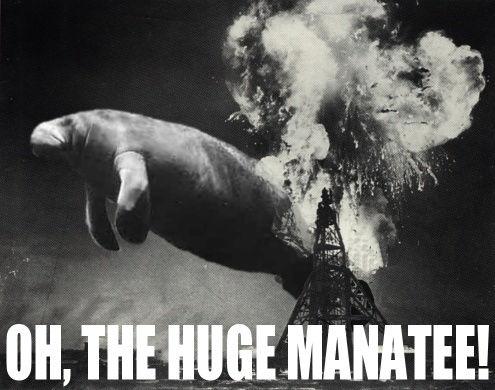 huge-manatee.jpg